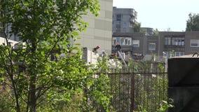 运作在工地工作的熟练的建造者包围由树和篱芭 股票录像
