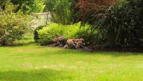运作的草坪供水系统在后院 股票录像