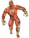 运动员强制肌肉 库存照片