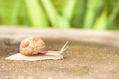 运动蜗牛 库存照片