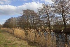运河和芦苇 库存照片
