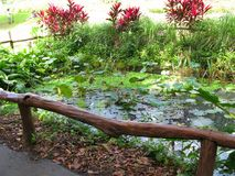 运河水池,拉梅萨Ecopark,奎松市,菲律宾 库存照片