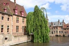 运河结构树 免版税库存照片