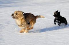 运行二的狗 免版税库存照片
