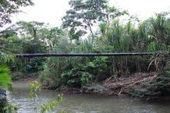 运行在一条热带河和周围的森林的油管被毁坏 库存照片
