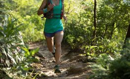 运行在早晨森林里的足迹赛跑者 库存图片
