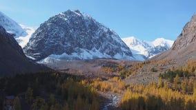 运行在生苔岩石的森林流 山在石头和峰顶中的绿松石河 秋天黄色落叶松属增长 股票视频