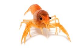 运行小龙虾 库存图片