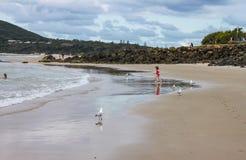 运行往海洋的桃红色游泳衣的小女孩当海鸥站立,并且她在海滩-其他peo的水中被反射 库存照片