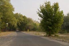 运行横跨绿色和黄色颜色早期的秋天树的路  风景 免版税库存照片