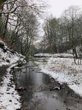 运行沿着一个多雪的森林风景的一条河的道路与冬天树在水中反射了 免版税库存照片
