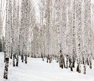 运行滑雪 库存图片