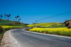 运行通过一块黄色花田的灰色柏油路 免版税图库摄影