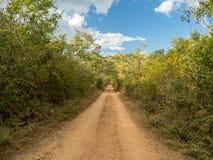 运行通过墨西哥密林,对古老的森林方式的多灰尘的路 免版税库存图片