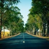 运行通过树胡同的路 免版税库存照片