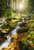 运行通过森林的春天 库存照片