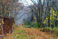 运行通过秋天颜色的领域的道路在印第安纳森林里 免版税库存图片