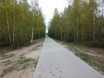 运行通过落叶林的路 免版税库存图片