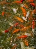 运行鱼 免版税图库摄影