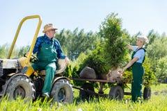运转与培养农场的树的妇女花匠的拖拉机的老人 免版税图库摄影