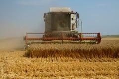 运转在一块金黄成熟麦田的联合收割机的正面图在一个明亮的夏日 全部五谷尘土在天空中 免版税库存照片