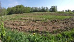 运转在春天领域的老减速火箭的农业拖拉机 Timelapse 4K 影视素材