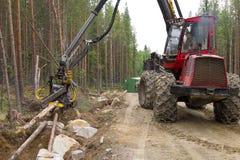 运转在森林里的收割机机器,砍年轻杉树 木产业 免版税库存图片