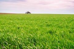 运转在领域的唯一拖拉机 绿草和年轻麦子 免版税图库摄影