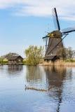 运转的葡萄酒风车在有鹅群的荷兰  免版税库存图片