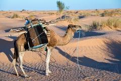 运载一个流浪的帐篷的骆驼在沙漠 免版税库存照片