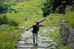 运载一根竹树干的人。喜马拉雅山,尼泊尔 免版税库存照片