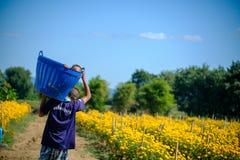 运载与里面婴孩的一个人一个篮子与万寿菊开花农场 库存图片