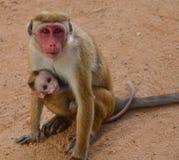 运载它的婴孩的Monkay 免版税库存图片