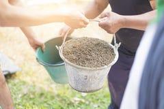 运载混合的建筑沙子与水泥和修建房子的更老的劳方或工作者 库存图片