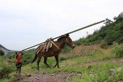 运载的驴货物 库存照片