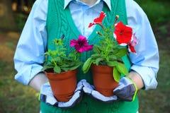 运载红色和绯红色喇叭花的年幼植物妇女 免版税图库摄影