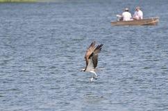 运载通过两位渔夫的白鹭的羽毛一条被抓的鱼 库存照片