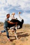 运载他后面004的驼鸟一个女孩 免版税库存照片