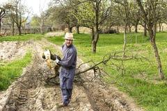 运载从他的果树园的年轻人一个重的分支 免版税库存图片