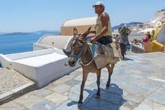 驴运输在Oia,圣托里尼,希腊 免版税图库摄影