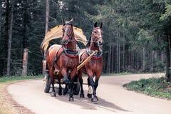 运输的人有摇篮车的由Morskie Oko湖在Tatras,波兰马 图库摄影