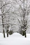 运输路线公园冬天 免版税图库摄影