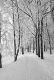 运输路线冬天 图库摄影