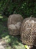 运输活鸡的传统竹篮子在巴厘岛 库存图片