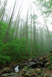 近亚特兰大森林 库存照片