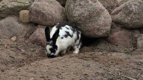 近兔子对洞 股票录像