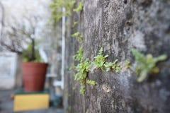 近景,中等看法,遥远的看法,植物 免版税库存照片