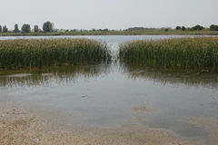 近湖由海 库存图片