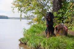 近猎狗对猎枪和战利品,户外 免版税库存图片