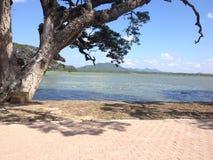 近的kataragama的湖 免版税库存照片